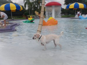 water dog park photo pet travel tuesday