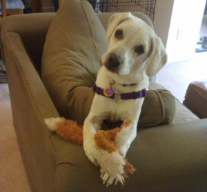 Daisy with her stuffingless critter toy