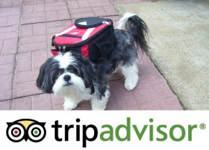 Top 10 Pet Friendly Hotels 2011