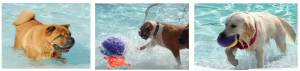 dog water park pet travel tuesday