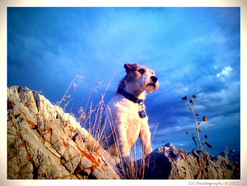 SLC Pawtography Pro Tips for Great Pet Photos
