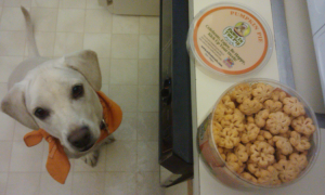 daisy waiting for paws in the pie treats
