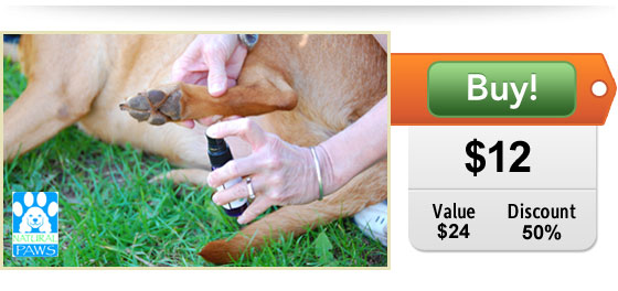half off gentlepaws healing spray for pets