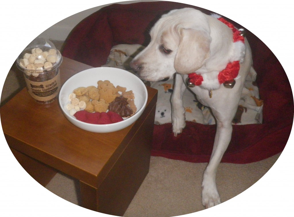 Daisy with Three Dog Bakery holiday treats