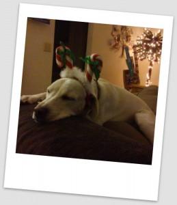 Daisy Christmas 2011