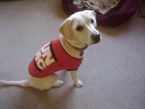 Daisy in her new Retro Run DMC tshirt from PetSmart