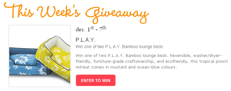 Modern Dog Giveaway  Bamboo Lounge Bed