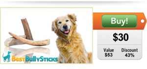 Elk Antlers for Dogs on Sale