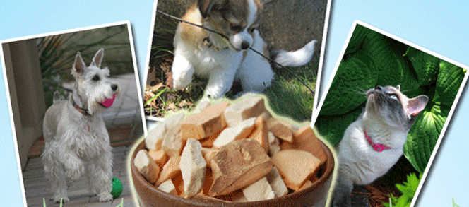 terra paws treats and products half off