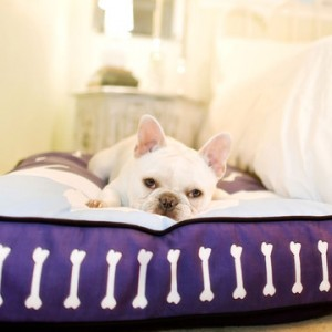 P.L.A.Y. Dog Beds on Sale
