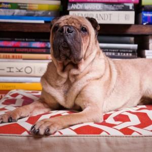 stylish and comfy dog beds on sale