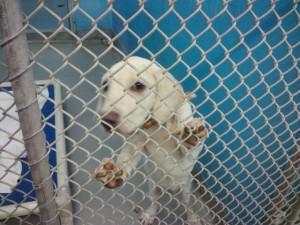 Daisy at Humane Society Shelter
