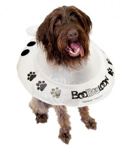 BooBooLoon Pet Recovery Collars Giveaway