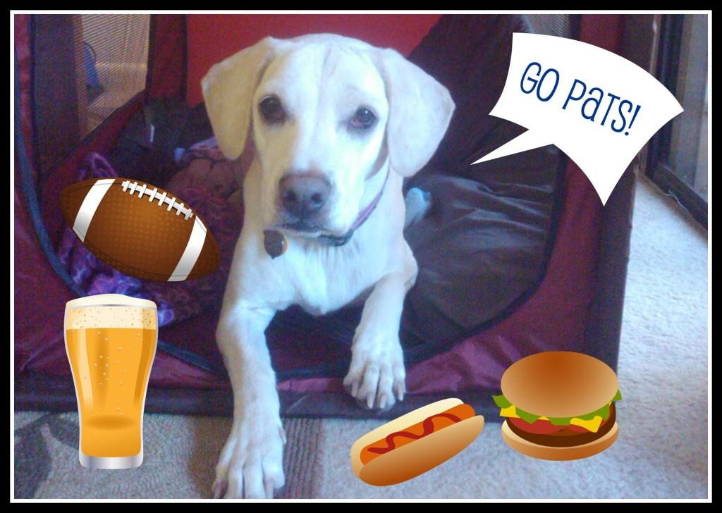 Daisy says Go Pats