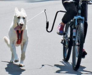 Modern Dog Magazine Dog Exercise Giveaway!