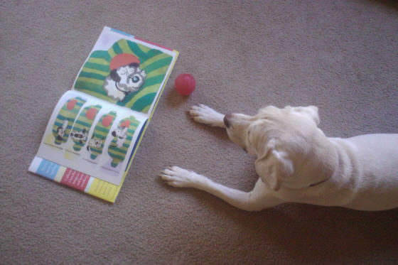 daisy reading red ball book