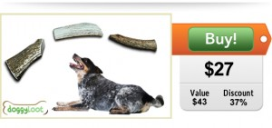 DoggyLoot deal for dogs elk antlers