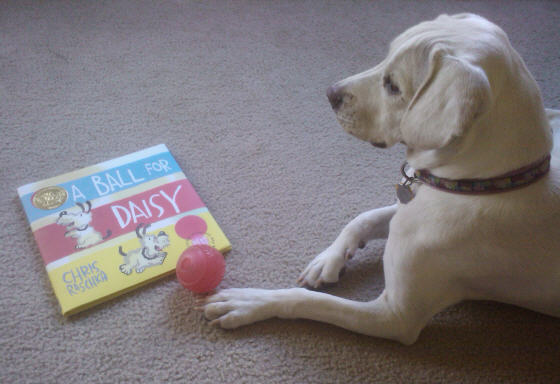 Daisy got a new book from Grandma and Grandpa