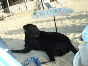 Fin on the beach