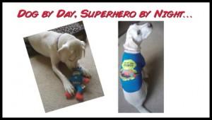Win a Marvel Comics Dog Tee and Superhero Toy