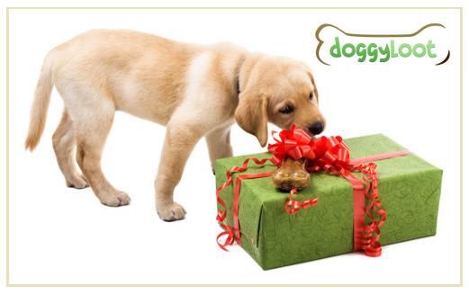 DoggyLoot Mystery Box Deal