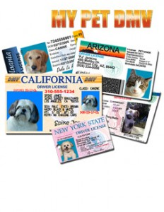 pet driver's license deal