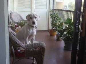 Daisy on the patio
