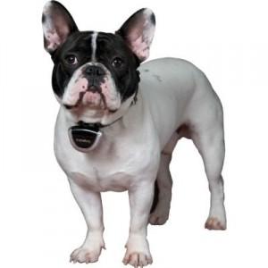 Dogtek Eyenimal Digital Videocam for Pets