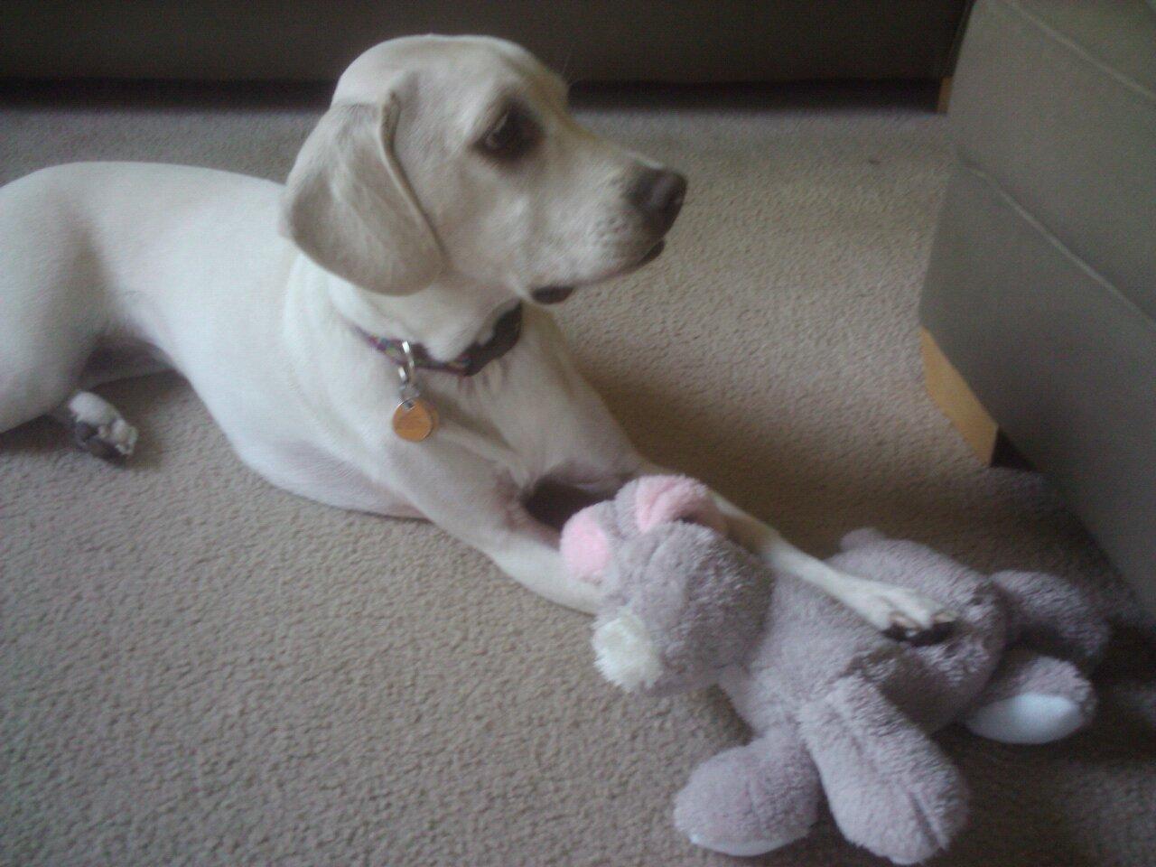Daisy Easter bunny