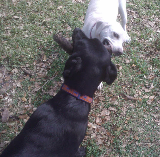 Daisy and Fin