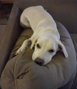 Daisy couch potato