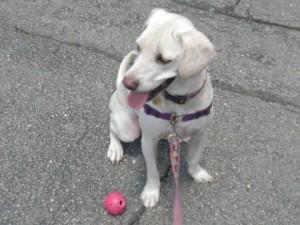 Daisy Pink Nebo Ball