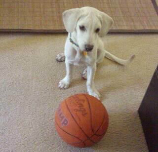 Daisy as a Puppy with Basketball