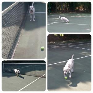Daisy Tennis