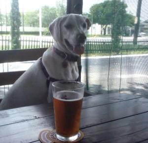 Daisy at the bar