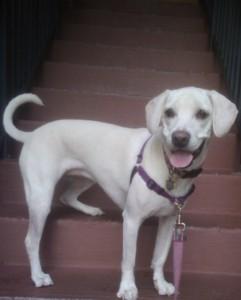 Daisy stairs