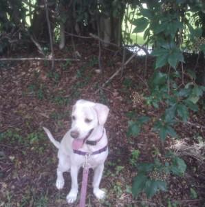 Nature Walk with Daisy