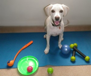 Daisy with her Nebo Balls