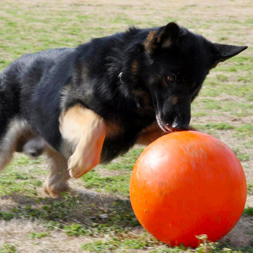 Indestructible Varsity Ball for Dogs