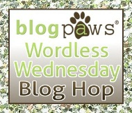Wordless Wednesday Pet Blog Hop