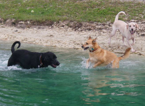 Daisy, Fin and Stella at Dog Lake