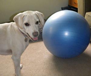 Daisy fitness ball