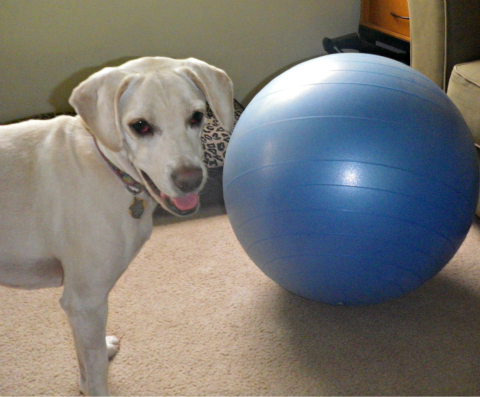 Daisy fitness ball