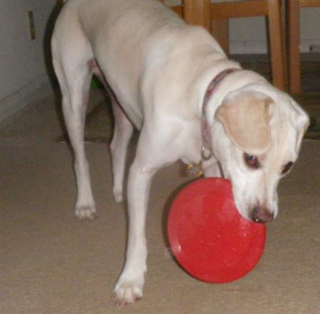 Indoor Frisbee