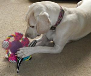 rope ring dog toy
