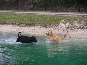 Daisy Fin Stella Lake Play Date