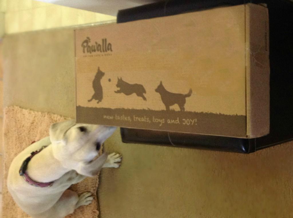 Daisy Exploring her Pawalla Box
