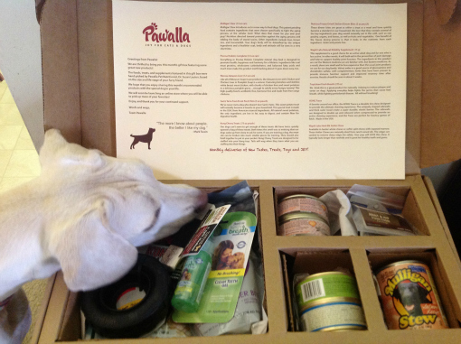 Daisy checking out her pawalla mystery box of goodies for dogs
