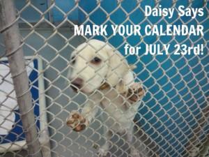 Daisy shelter pic