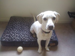 cute white dog, leopard print dog bed, P.L.A.Y. Dog Bed